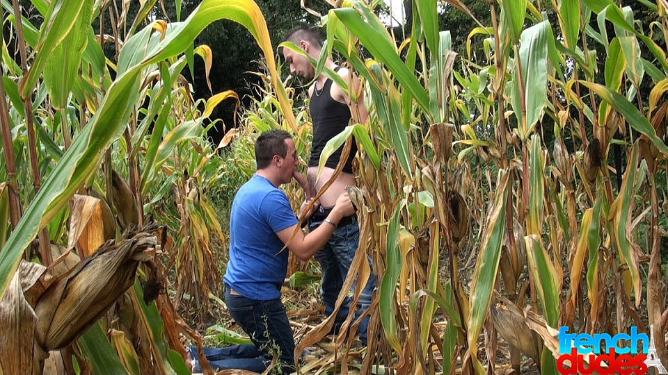 This time I think the corn is ripe - Jimmy Fix, Mac Peal