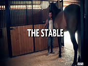 The Stable - DMH - Damien Crosse - David Dirdam